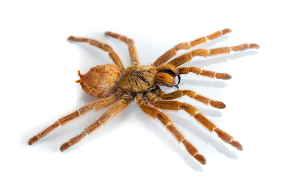 spider removal treatment