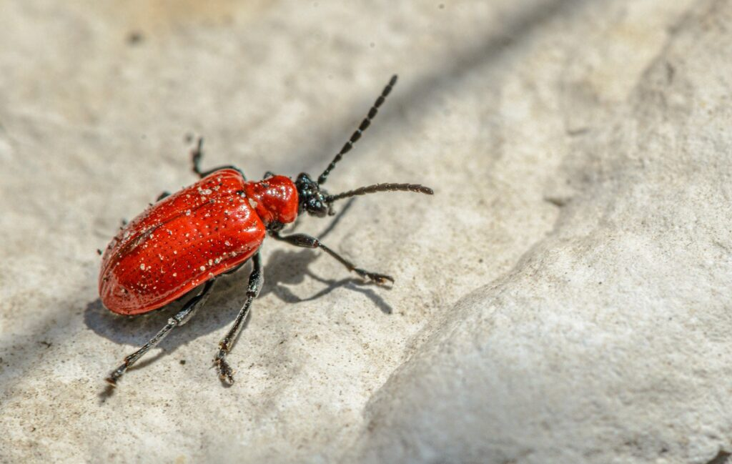 beetles pest infection